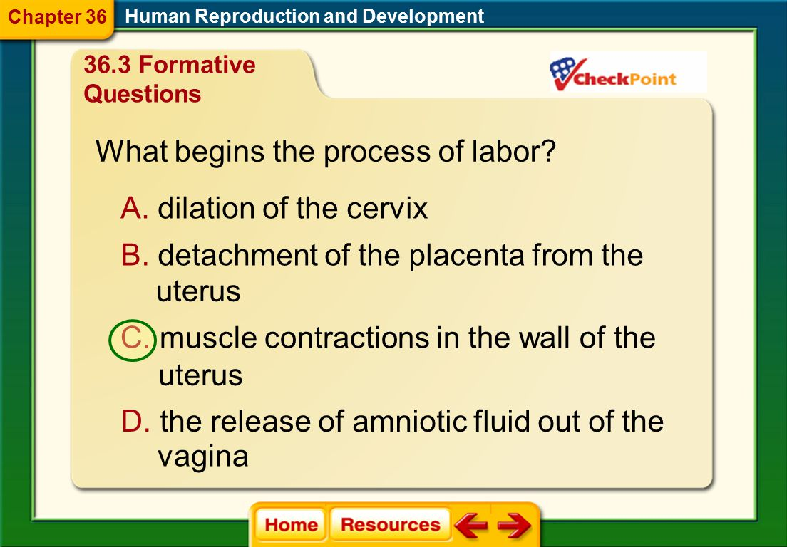 What begins the process of labor