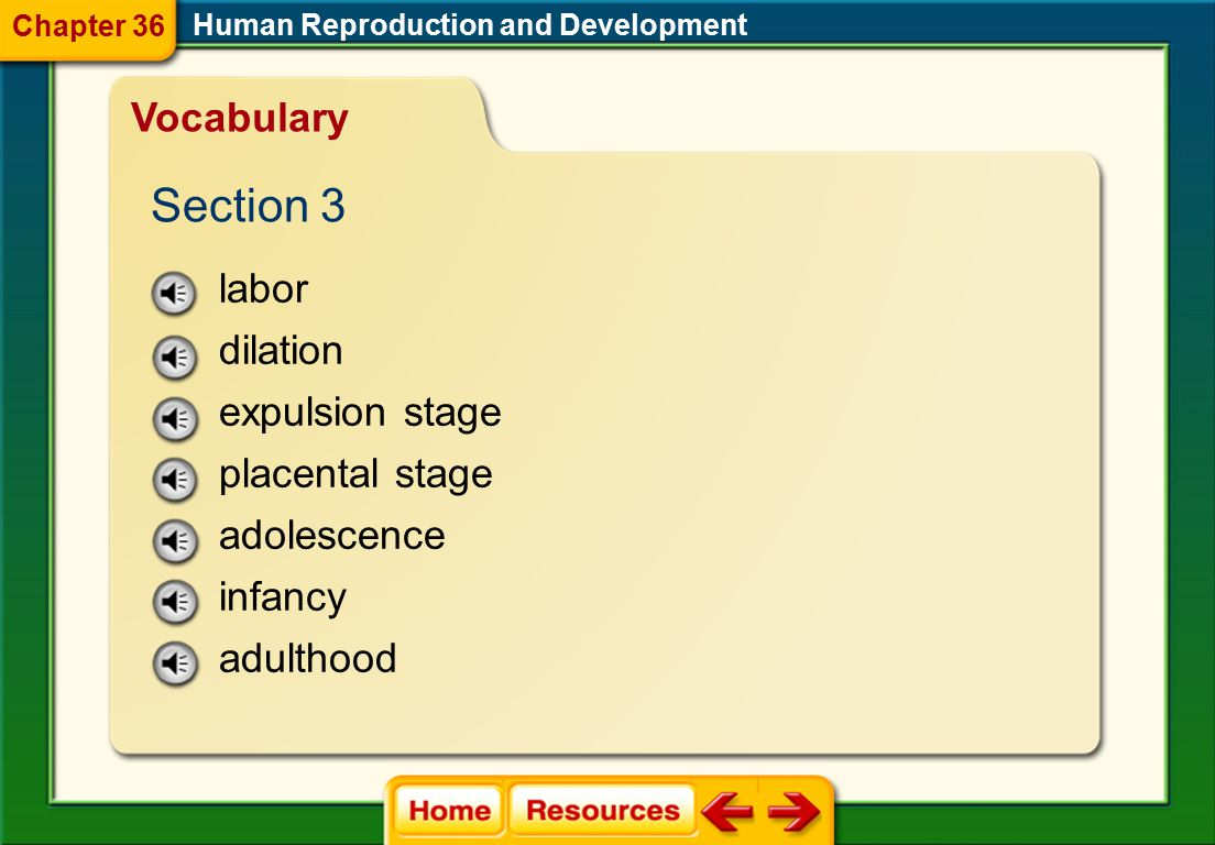 Section 3 Vocabulary labor dilation expulsion stage placental stage