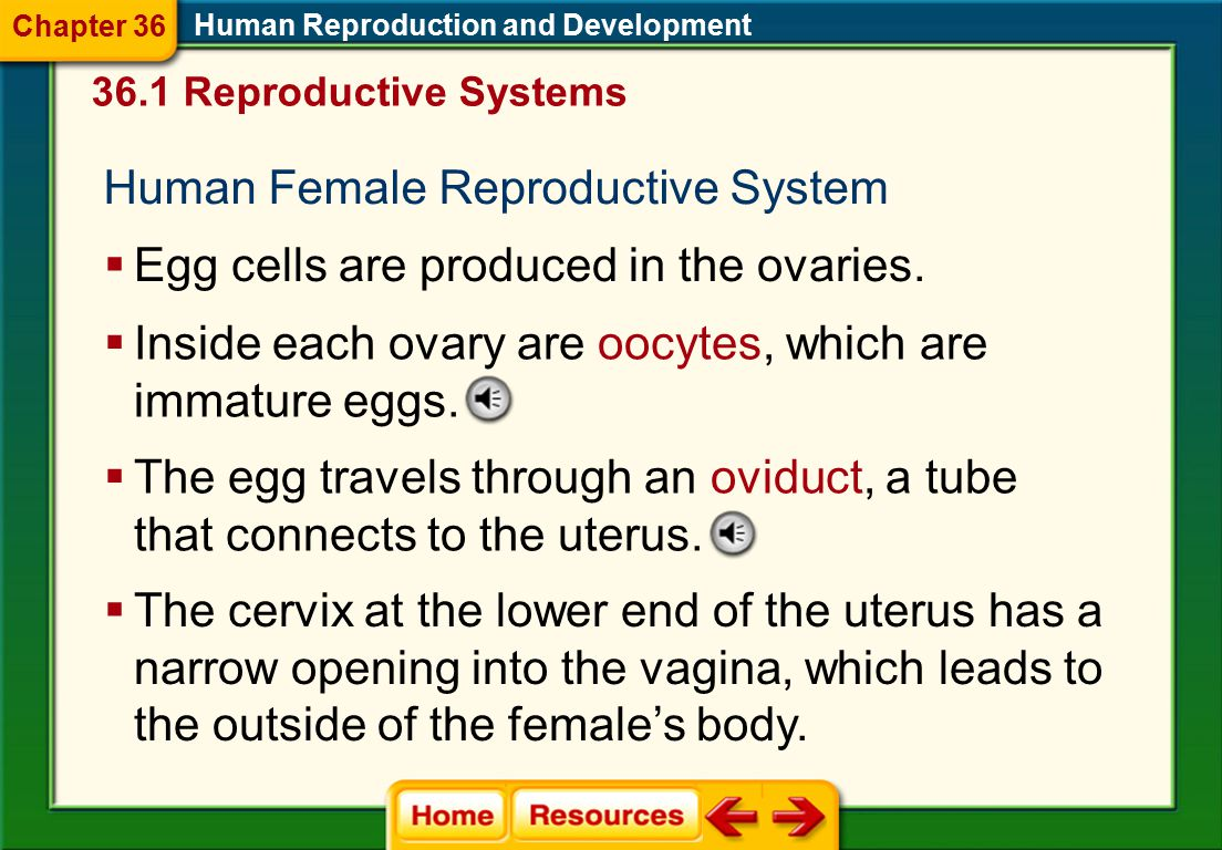 Human Female Reproductive System
