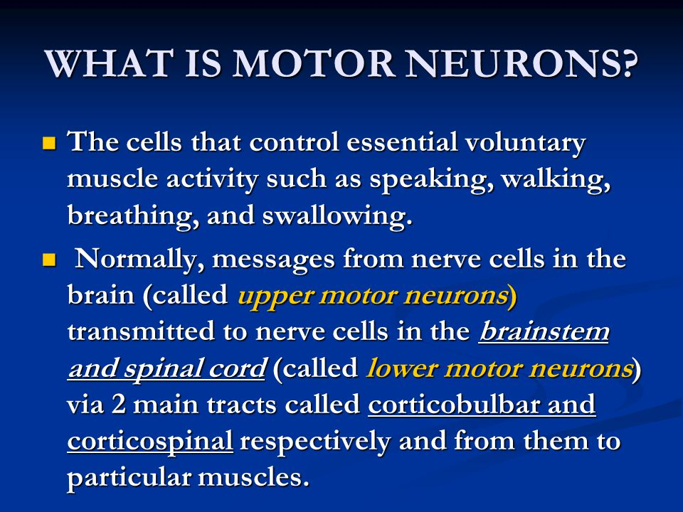 WHAT IS MOTOR NEURONS The cells that control essential voluntary muscle activity such as speaking, walking, breathing, and swallowing.