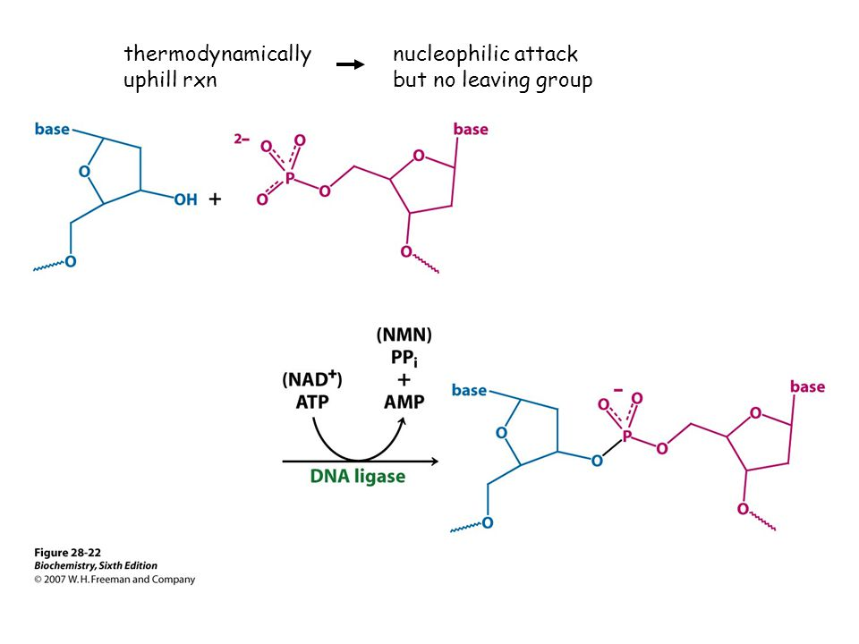 thermodynamically uphill rxn nucleophilic attack but no leaving group