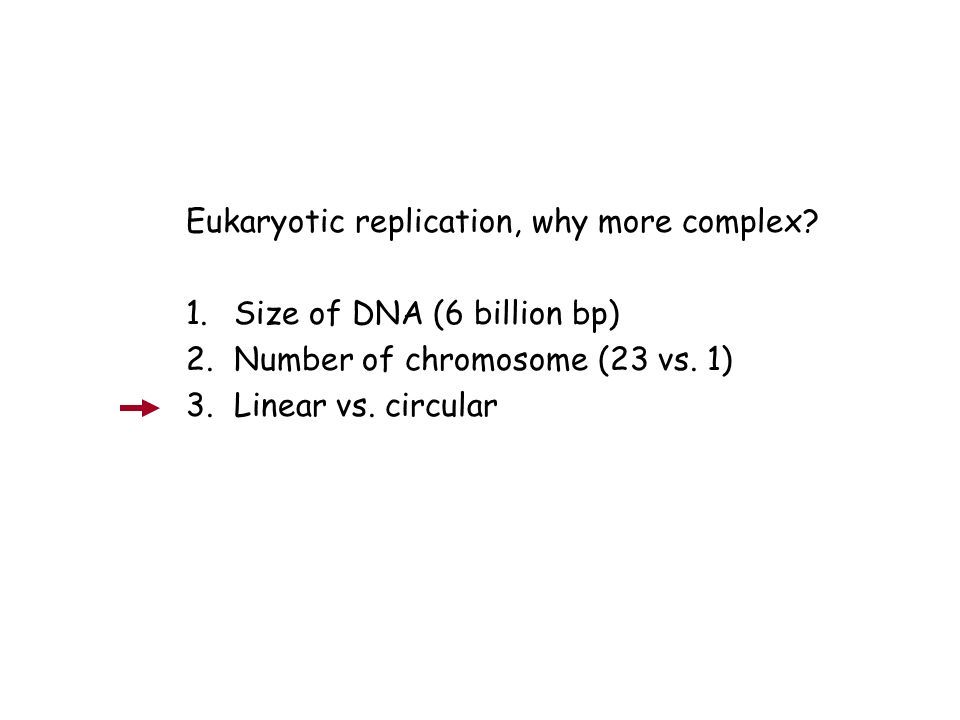 Eukaryotic replication, why more complex
