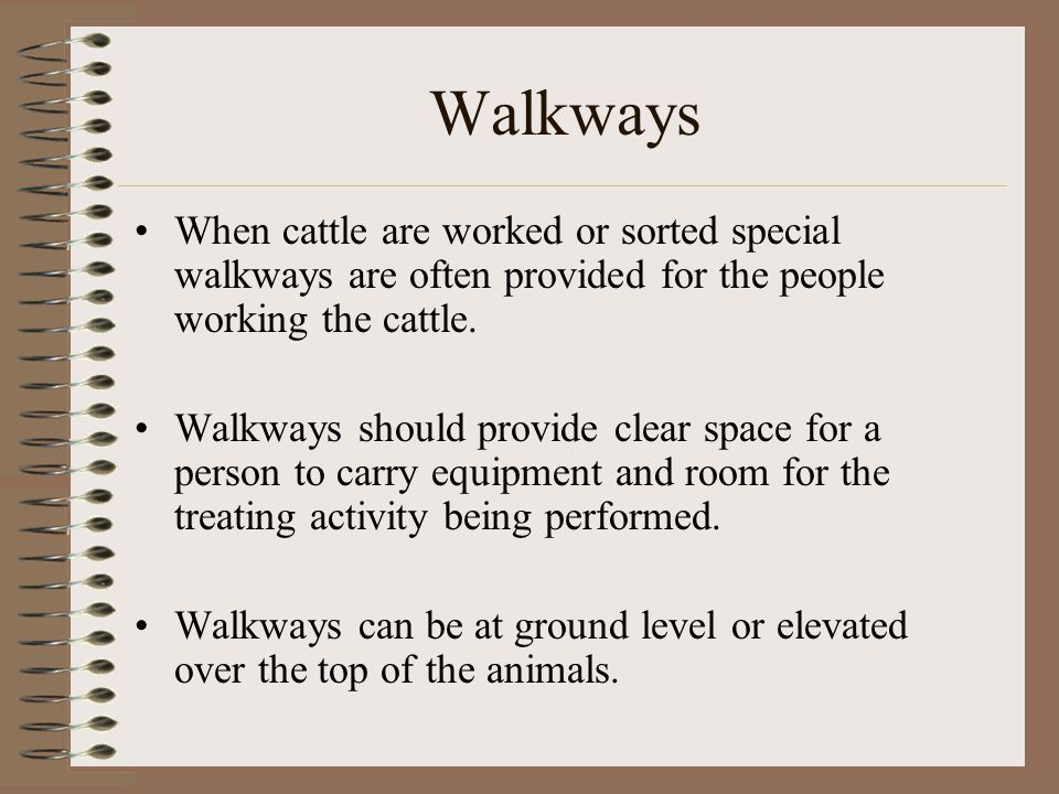 Walkways When cattle are worked or sorted special walkways are often provided for the people working the cattle.