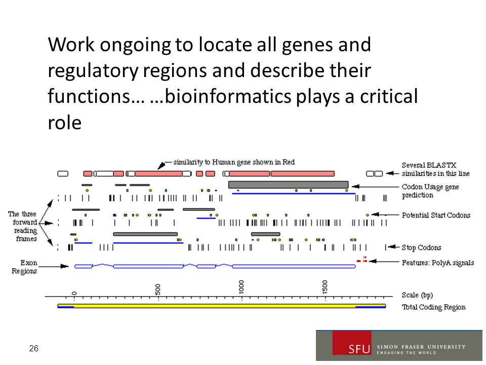 Work ongoing to locate all genes and regulatory regions and describe their functions… …bioinformatics plays a critical role