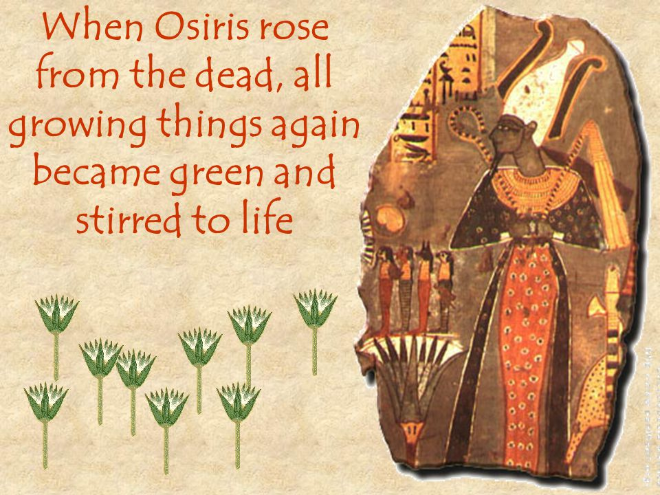 When Osiris rose from the dead, all growing things again became green and stirred to life
