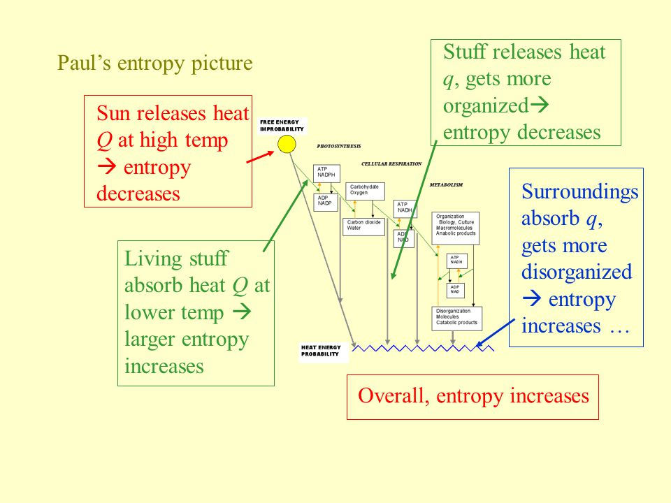 Stuff releases heat q, gets more organized entropy decreases