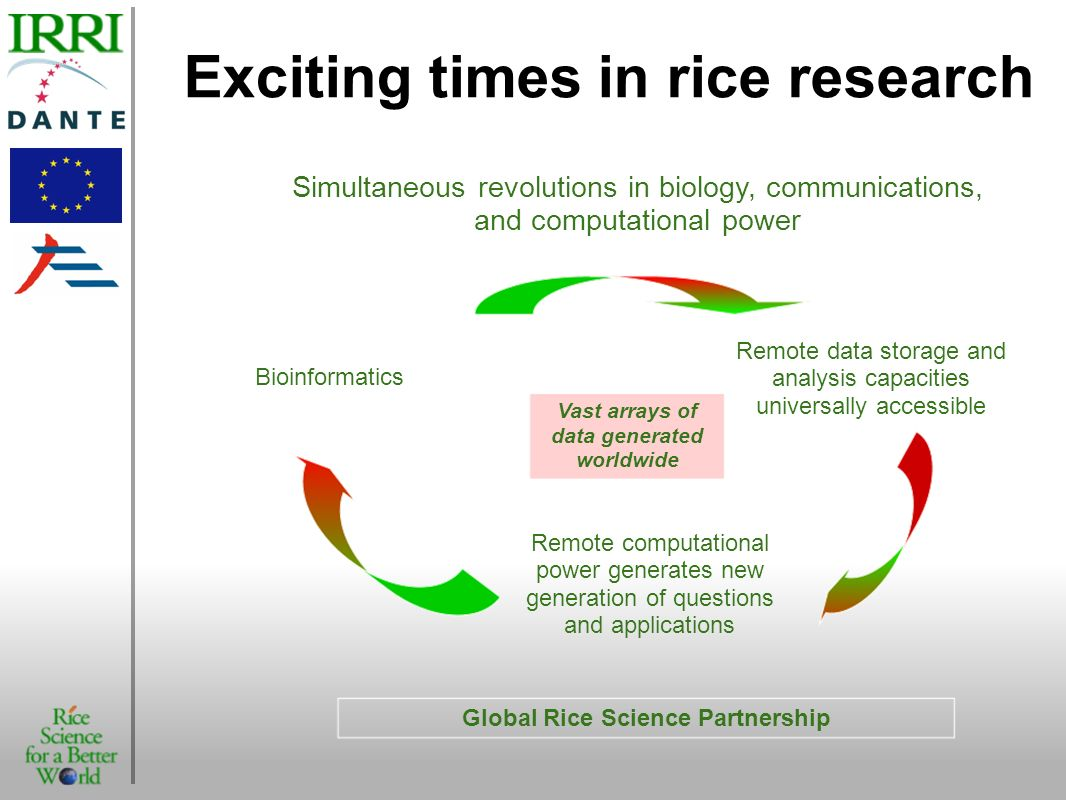 Exciting times in rice research
