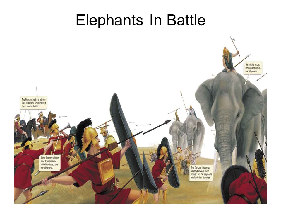 Elephants In Battle