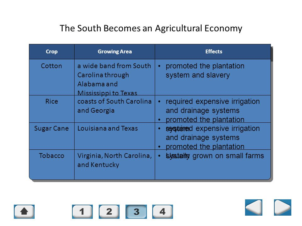 The South Becomes an Agricultural Economy