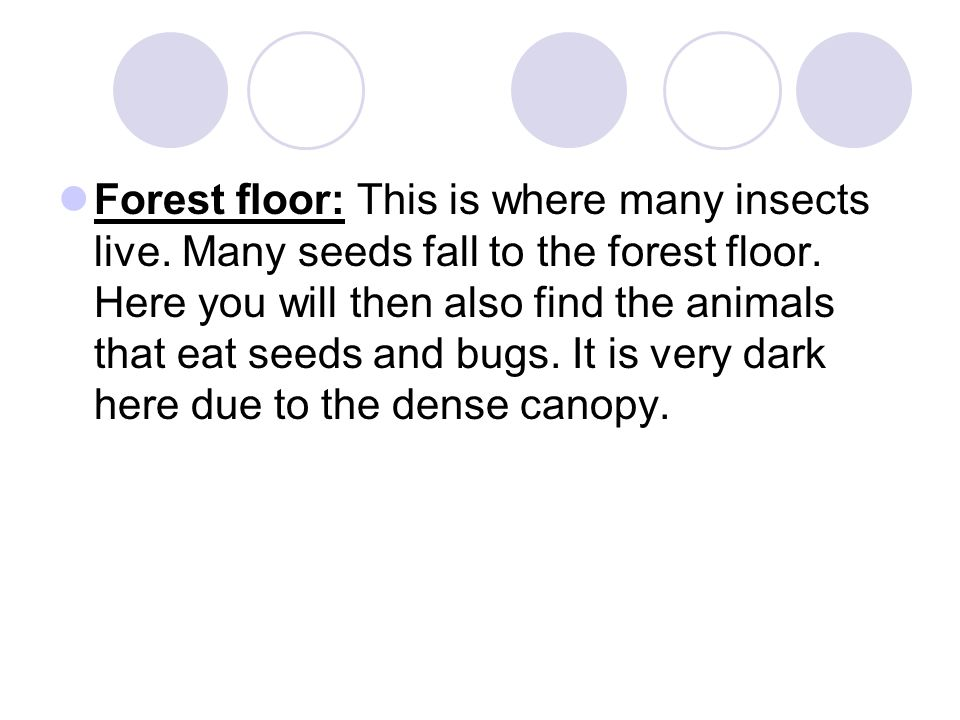 Forest floor: This is where many insects live