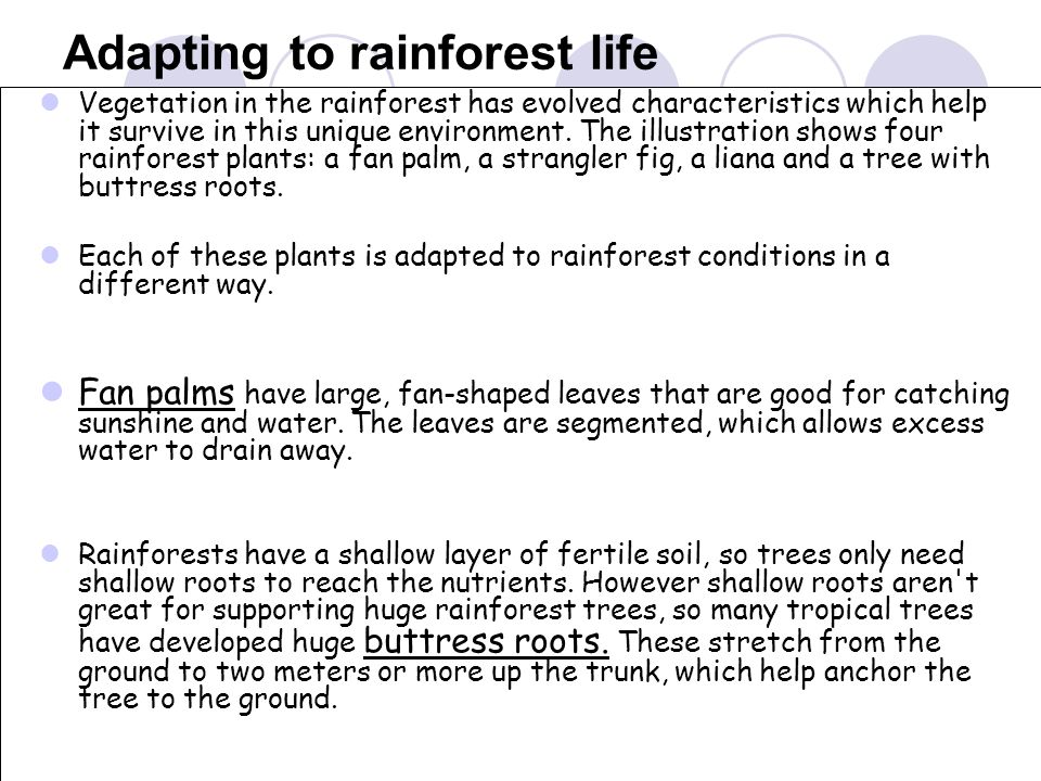 Adapting to rainforest life
