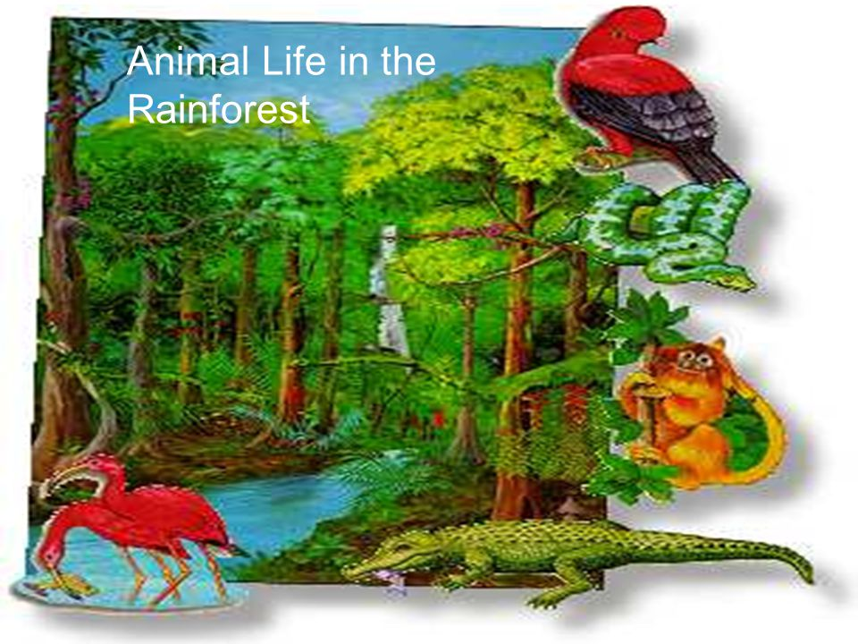 Animal Life in the Rainforest