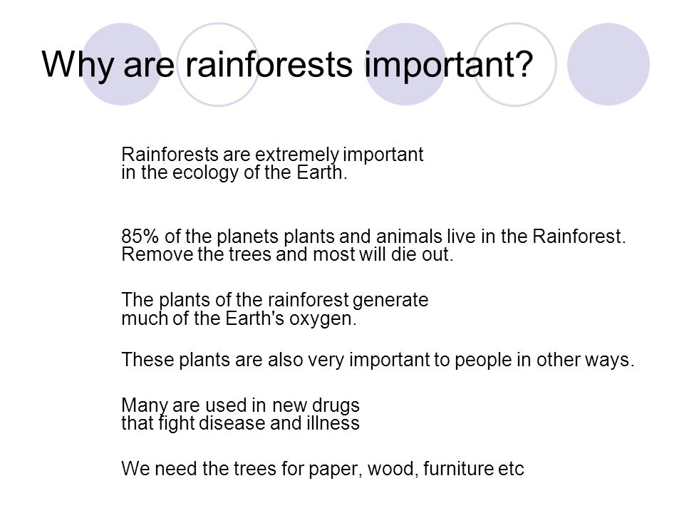 Why are rainforests important