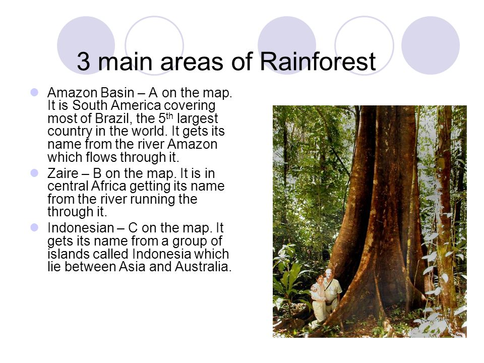 3 main areas of Rainforest