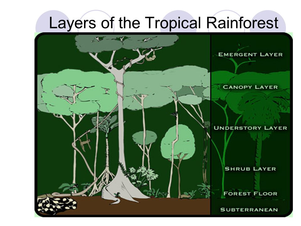 Layers of the Tropical Rainforest