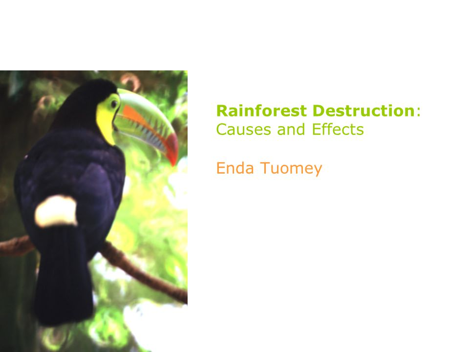 Rainforest Destruction: Causes and Effects