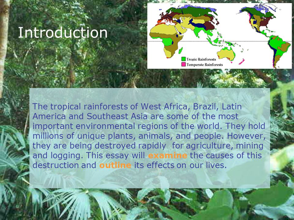destruction of rainforest essay Find deforestation example essays, research papers, term papers, case studies or speeches deforestation is happening in this world every minute of the day.