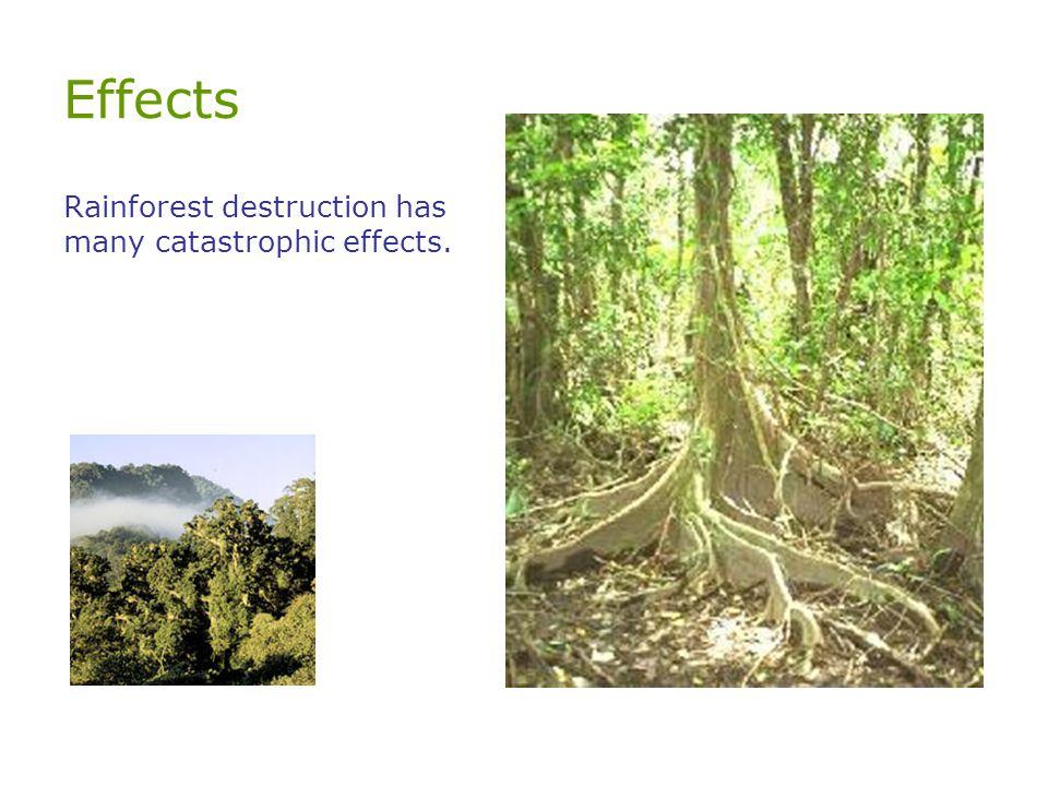 Effects Rainforest destruction has many catastrophic effects.