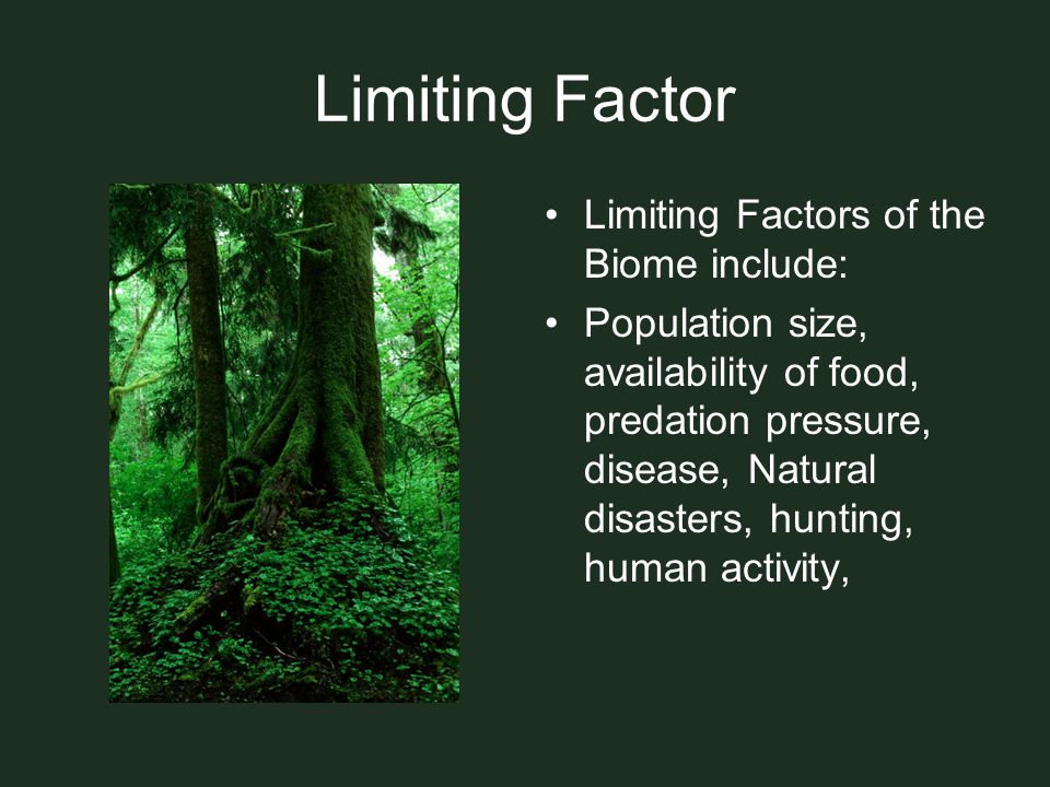 Limiting Factor Limiting Factors of the Biome include: