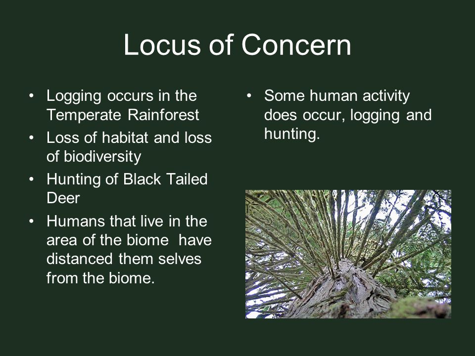Locus of Concern Logging occurs in the Temperate Rainforest