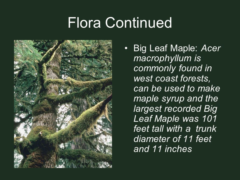 Flora Continued