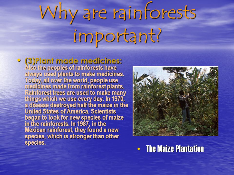 Rainforest geo project designed by ppt video online for What do we use trees for