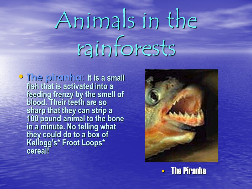 Animals in the rainforests