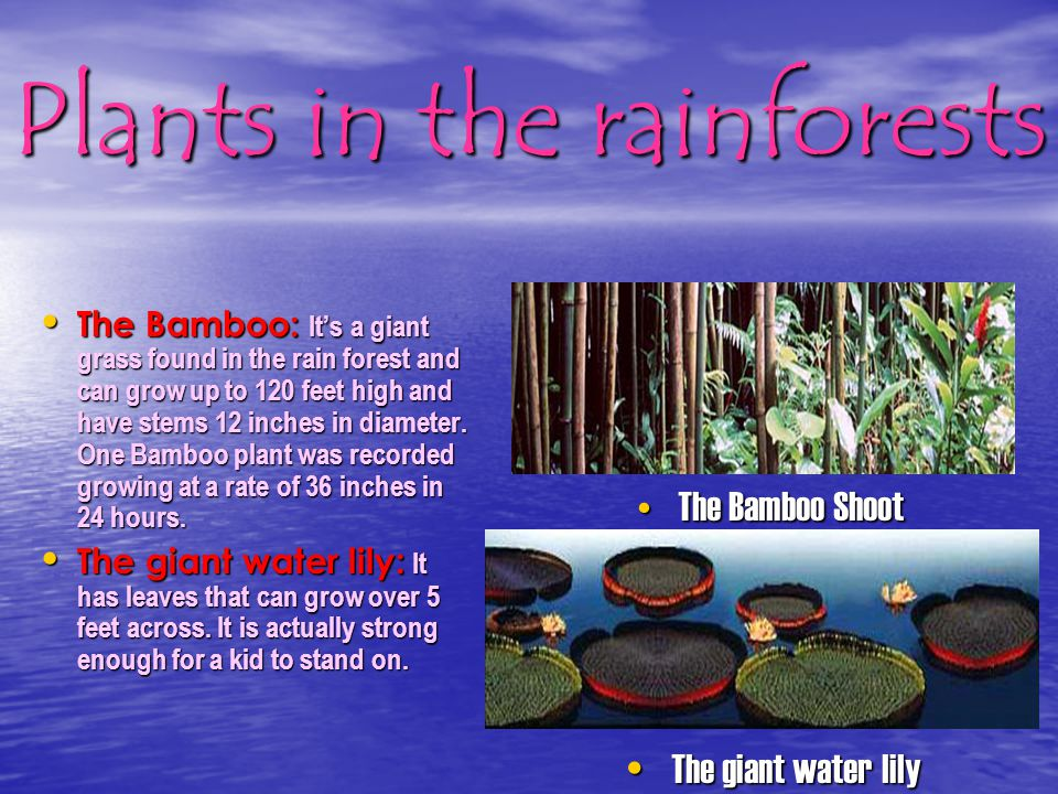 Plants in the rainforests