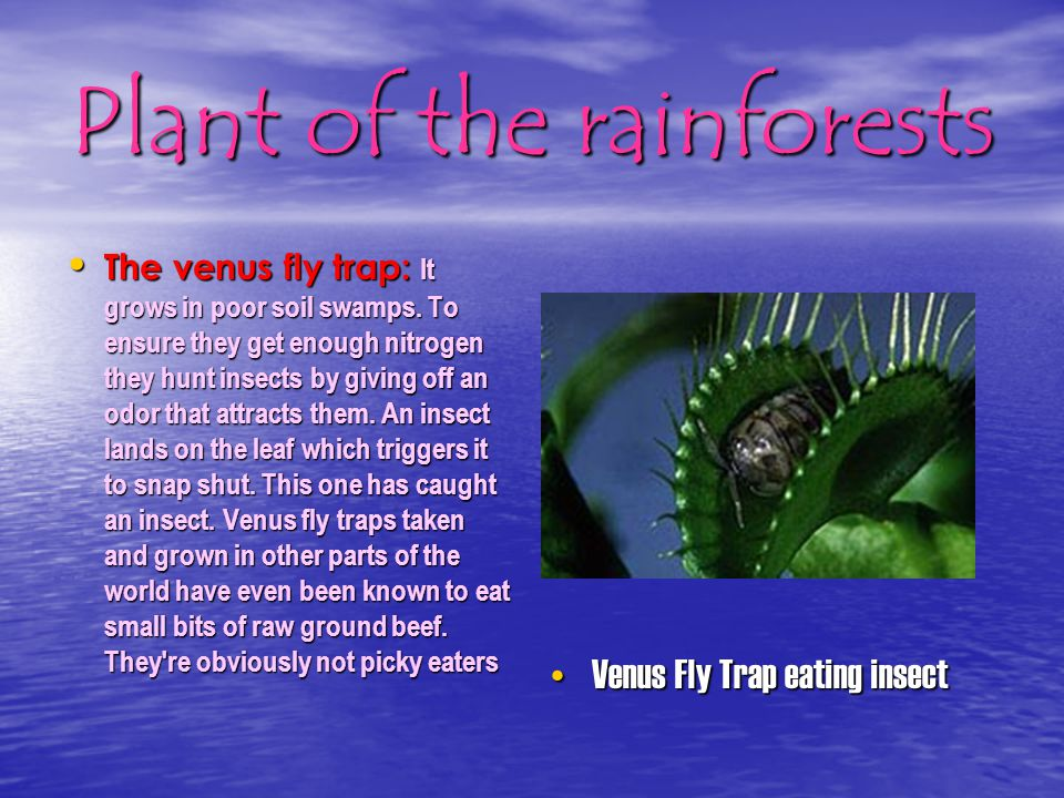 Plant of the rainforests