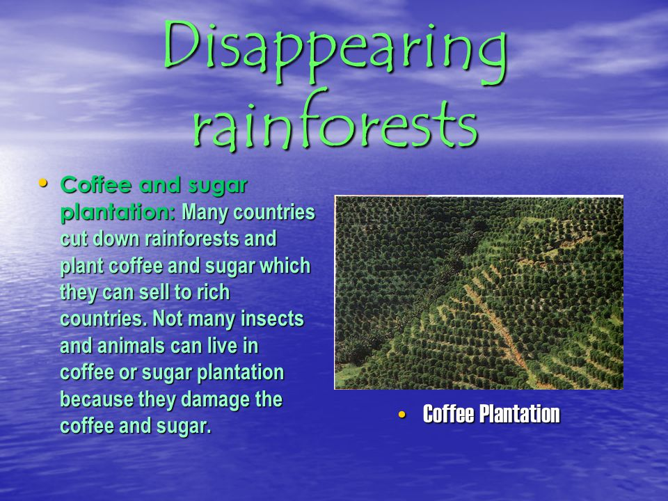 Disappearing rainforests