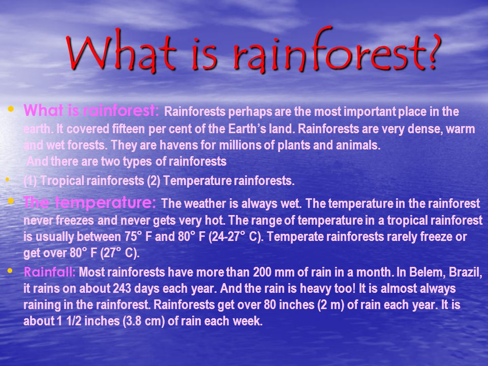 What is rainforest