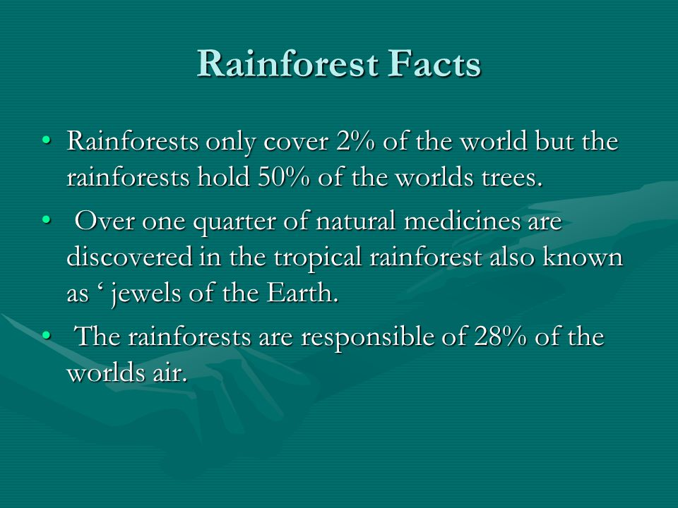 Rainforest Facts Rainforests only cover 2% of the world but the rainforests hold 50% of the worlds trees.