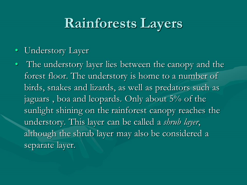 Rainforests Layers Understory Layer