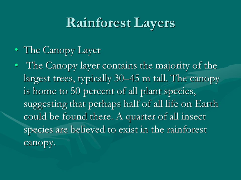 Rainforest Layers The Canopy Layer