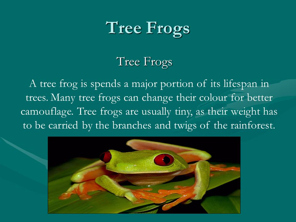 Tree Frogs Tree Frogs.