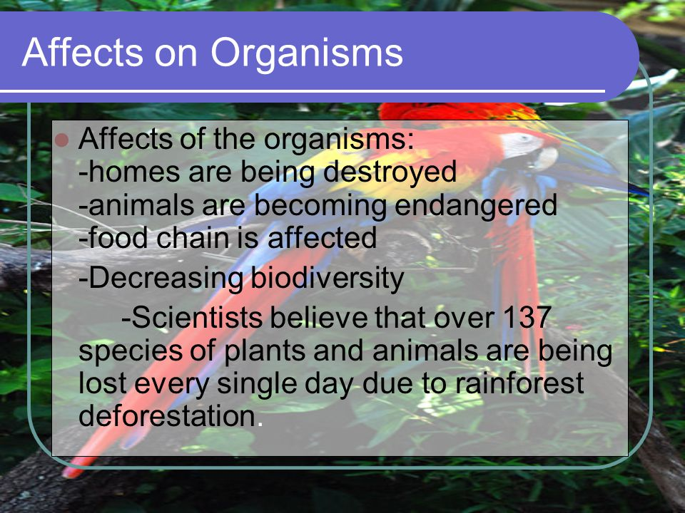 Affects on Organisms Affects of the organisms: -homes are being destroyed -animals are becoming endangered -food chain is affected.