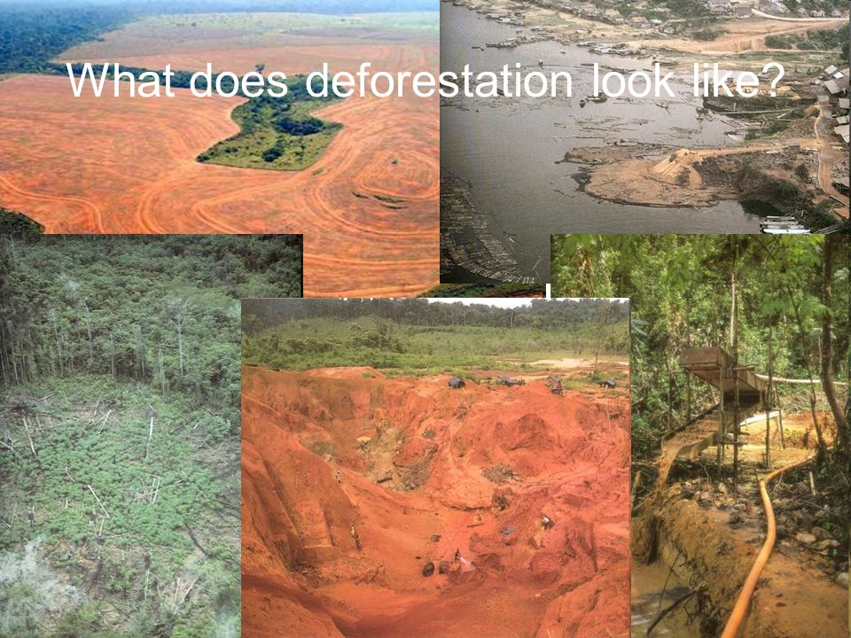 What does deforestation look like