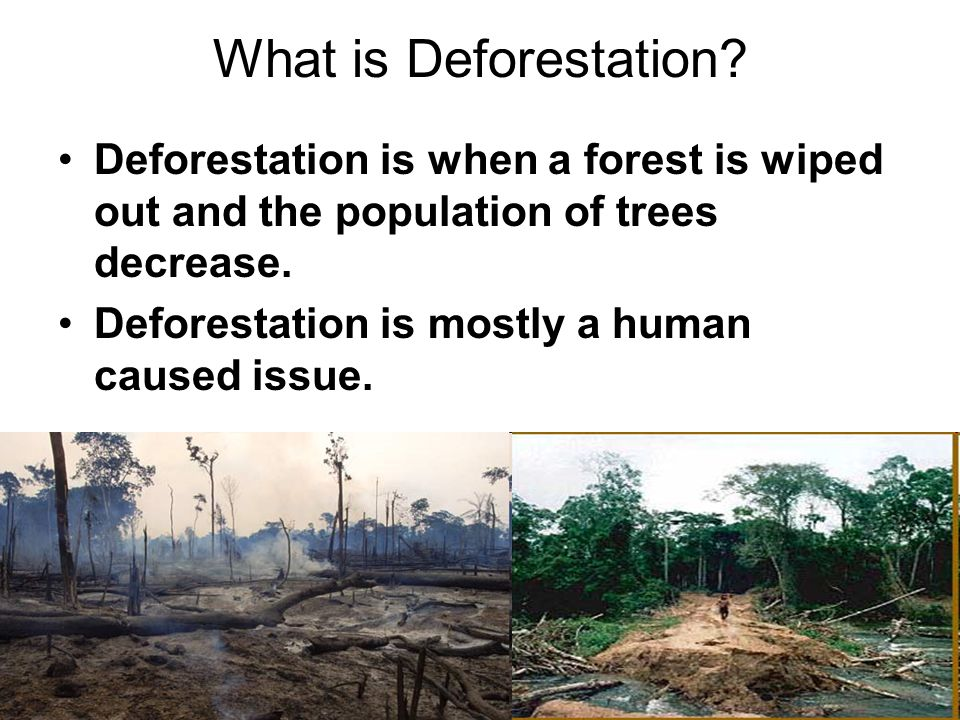 What is Deforestation Deforestation is when a forest is wiped out and the population of trees decrease.