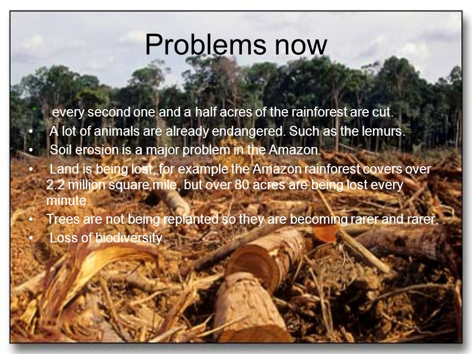 Problems now * every second one and a half acres of the rainforest are cut. A lot of animals are already endangered. Such as the lemurs.