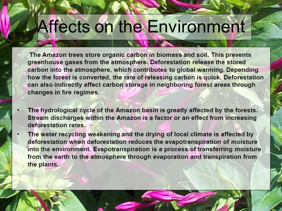 Affects on the Environment