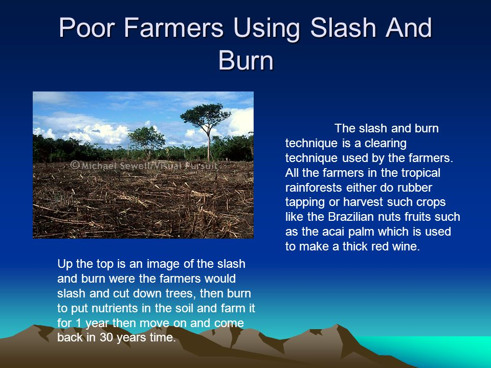 Poor Farmers Using Slash And Burn
