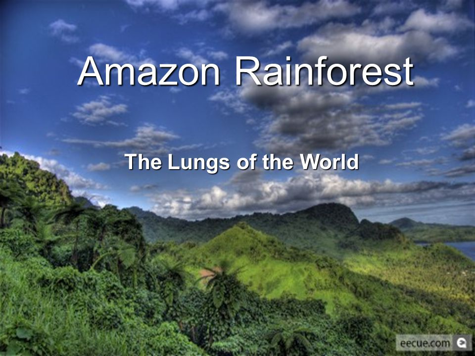 Amazon Rainforest The Lungs of the World