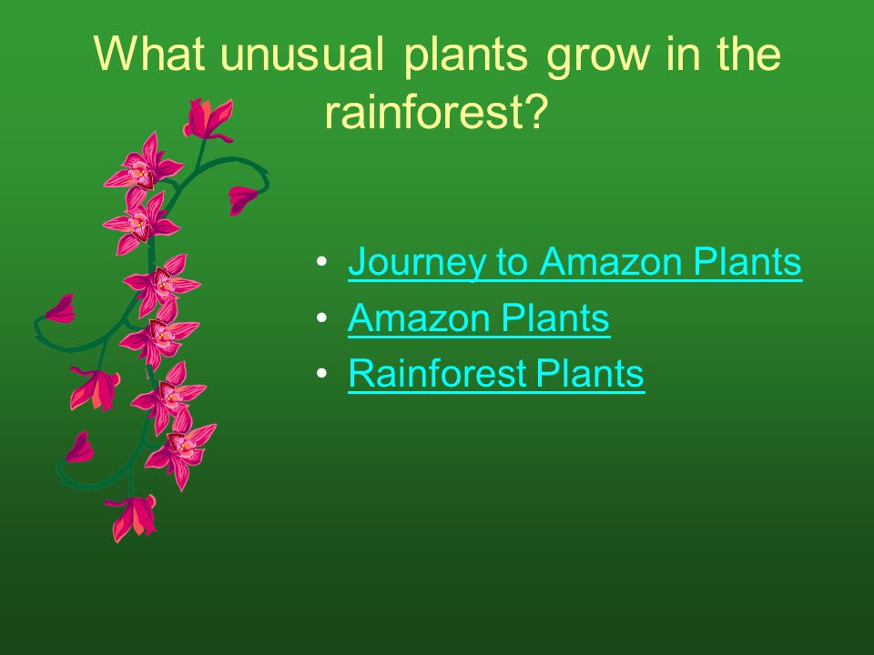 What unusual plants grow in the rainforest