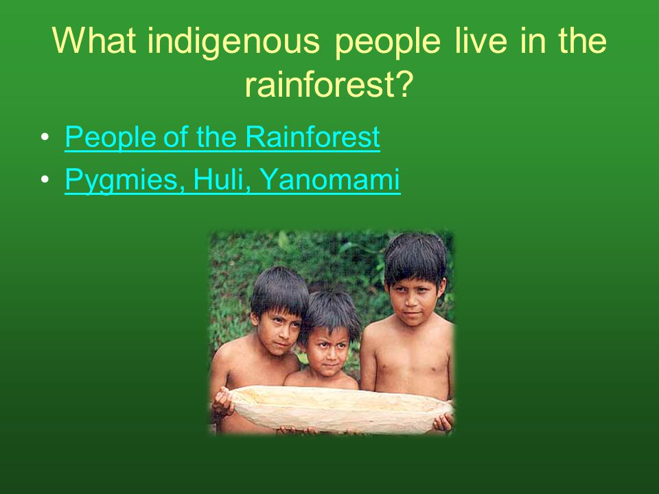 What indigenous people live in the rainforest
