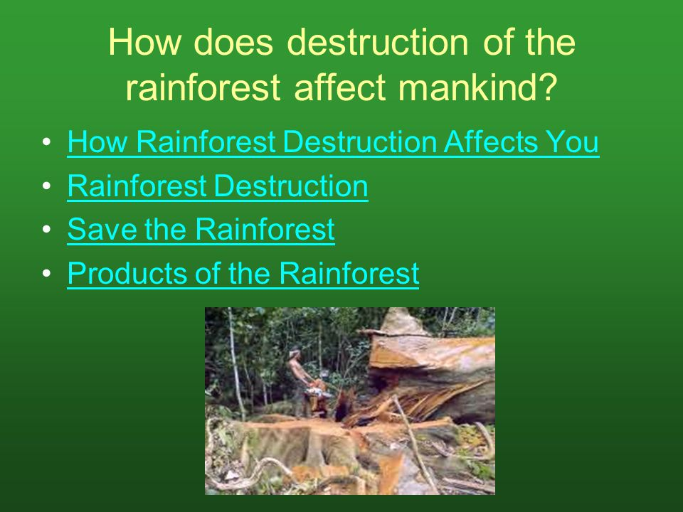 How does destruction of the rainforest affect mankind