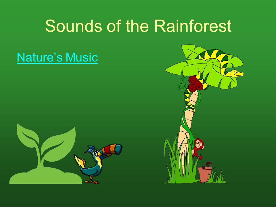 Sounds of the Rainforest