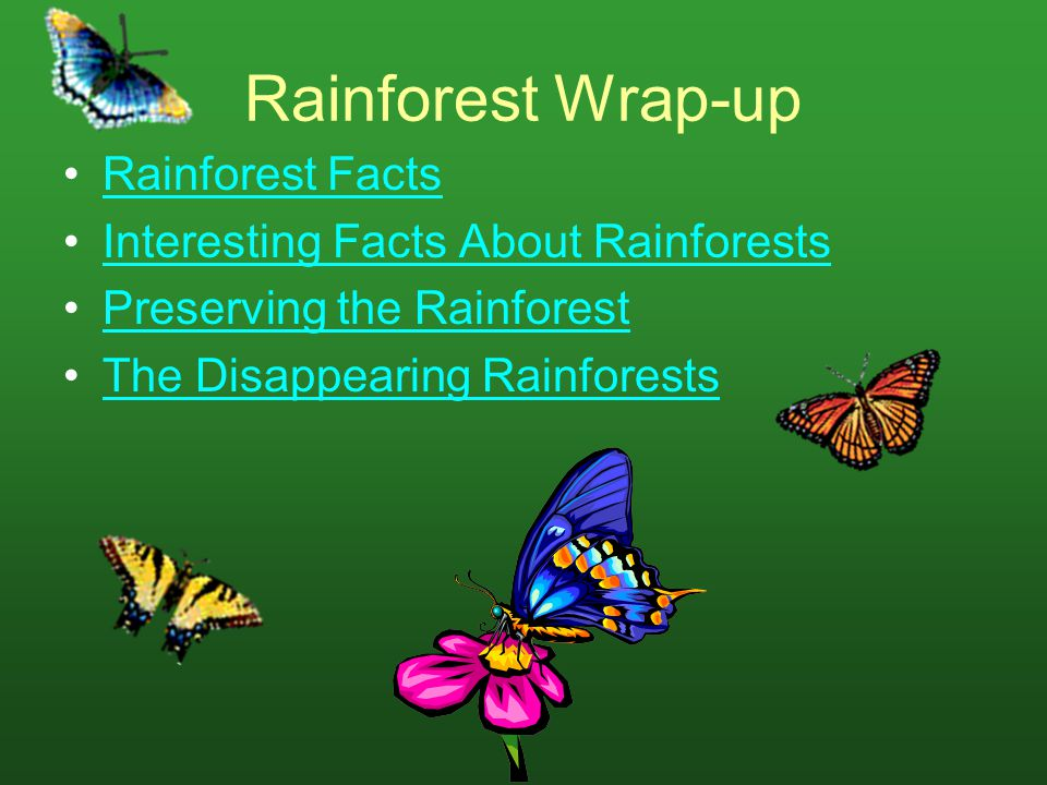 Rainforest Wrap-up Rainforest Facts