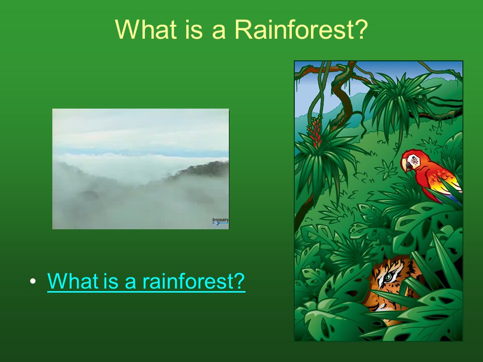 What is a Rainforest What is a rainforest