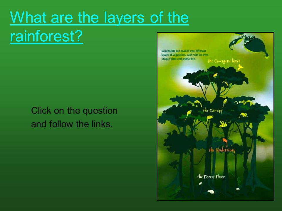 What are the layers of the rainforest