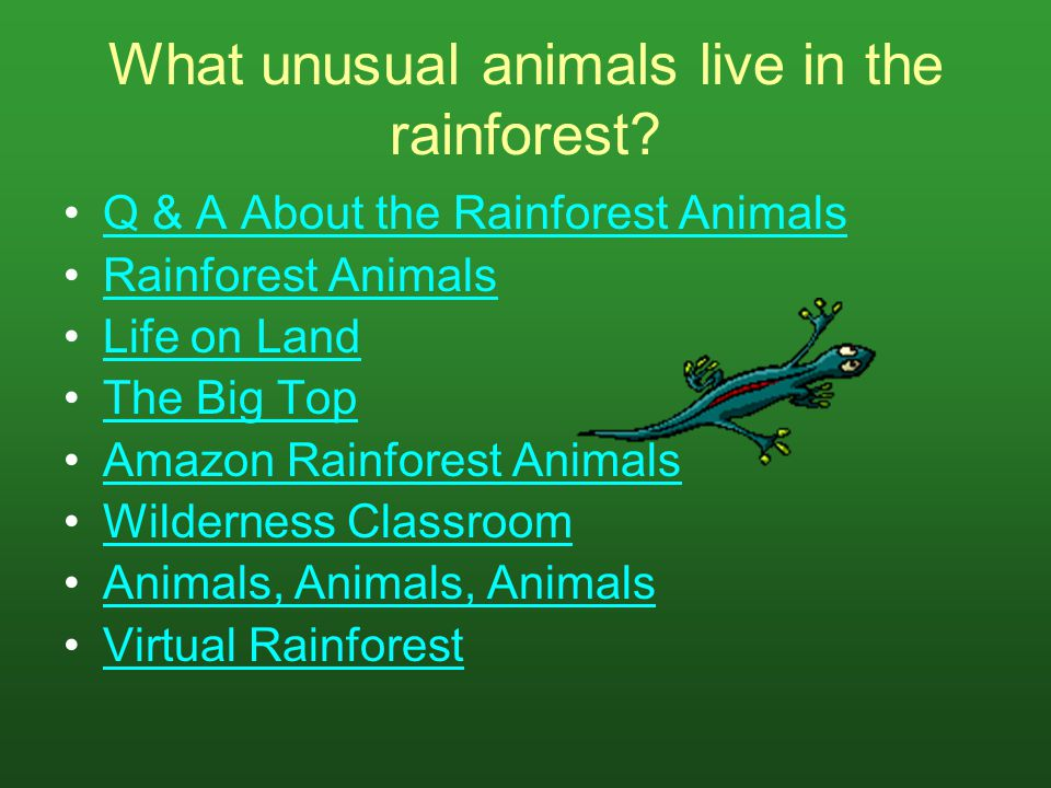 What unusual animals live in the rainforest